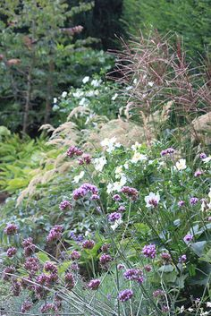 Verbena bonariensis with anenomes and ornamental grasses (landscape design by Guy Wolfs).