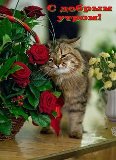 I loves roses Cute Cats And Kittens, I Love Cats, Crazy Cats, Cool Cats, Kittens Cutest, Pretty Cats, Beautiful Cats, Animals And Pets, Cute Animals