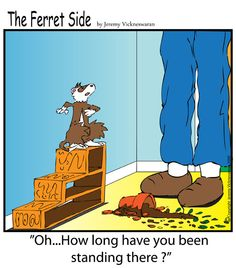 The Ferret's Side - a Ferret's magazine exclusive