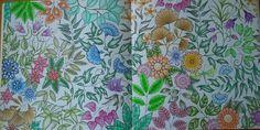 JOHANNA BASFORD - JARDIN SECRET / SECRET GARDEN #sunnycat67 #johannabasford #secretgarden #jardinsecret #coloriageadulte #arttherapy #coloriage #antistress