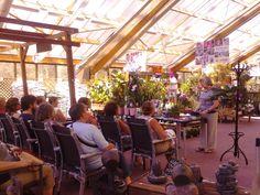 """Workshop """"Orquídeas Dendobrium"""" realizado no dia 17/08/13."""