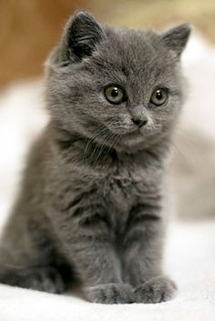 ~ VERY PRETTY ~ Found on welovecatsandkittens.com