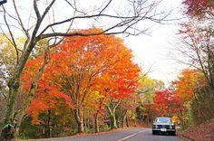 Giulia and autumn leaves 3