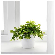 IKEA - MUSA BANANA, Pianta da vaso | flora | Pinterest