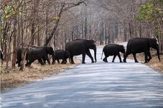 Lined-up march through the roadway of Muthanga...