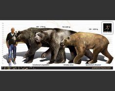 bison latifrons - Google Search