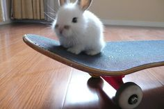 """""""I've never once paid taxes."""" 