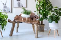 Made from Indonesian teak root, our Natura Dian Benches are live-edge wonders. Each one-of-a-kind piece is uniquely strong, durable, and perfect for indoors or out (but only when in a covered space). Solid Wood Furniture, Furniture Design, Live Edge Wood, Furniture Inspiration, Teak Wood, Online Furniture, Light Decorations, Form, Dining Bench