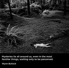 """""""Mysteries lie all around us, even in the most familiar things, waiting only to be perceived."""" - Wynn Bullock"""