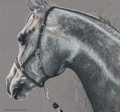 """""""Distracted""""- Colored pencil horse drawing by Cynthia Morris"""
