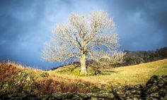 The sun came out! In the Scandale valley, near Ambleside.