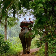 Elephant Ride. One day I will go to Thailand and do this!