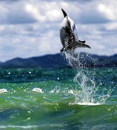dolphin - what a COOL shot!!