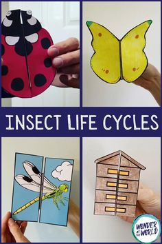 These insect life cycle foldables make a fun addition to science books. This resource looks at the life cycle of a butterfly, honey bee, ladybird and dragonfly. Pupils will love creating their foldable, then opening to reveal the life cycle inside. These could be used for a lesson on insects or minibeasts, life cycles or as a fun home school activity.  There are different options allowing you to differentiate the activity if required. Science Crafts, Science Books, Science For Kids, Science Projects, Preschool Crafts, Crafts For Kids, Science Lessons, Kids Learning Activities, Preschool Activities