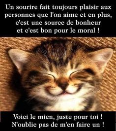 Cute Funny Animals, Funny Cats, Keep Calm And Smile, Photo Chat, Free Mind, Image Fun, Pusheen, Good Morning Quotes, Good Thoughts