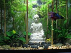 Zen - Buddha - Rock Garden Aquascape