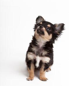 great puppy discipline /  training article
