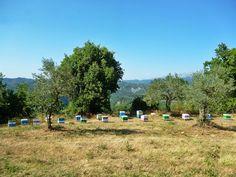 Οι μέλισσες συλλέγουν μελιτοεκκρίσεις της βελανιδιάς στα ορεινά της νότιας Πίνδου στα Όρη του Βάλτου. Our Apiary on mountain range of Pindos in northern Greece. Bees collect oak honeydew.