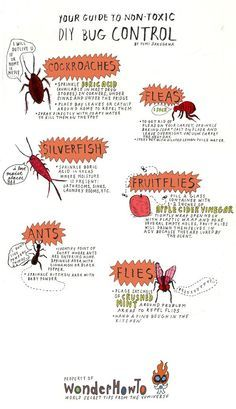 Your DIY Bug Repellent Guide to Common Household Pests - hoping I don't need this but I want to keep hold of this info just in case!