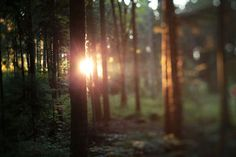 Backwoods.