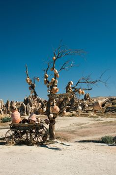 Cappadocia Tree, Turkey by David Hurley on 500px