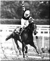 Seattle Slew - Triple Crown Winner 1977