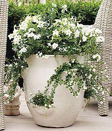 Bright whites in a strawberry pot