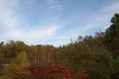 Vermont foliage from Fluid Motion