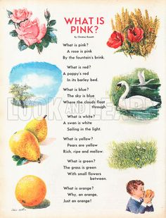What is Pink? Christina G. Rosetti