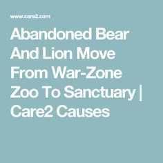 Abandoned Bear And Lion Move From War-Zone Zoo To Sanctuary | Care2 Causes