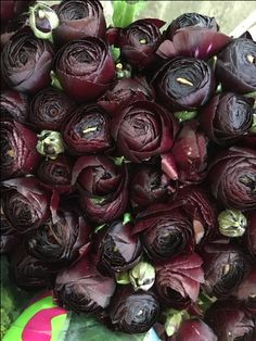 Sold in bunches of 40 stems from the Flowermonger the wholesale floral home delivery service. Red Wedding Flowers, Red Flowers, Ranunculus, The Locals, Big Day, Diy Wedding, Bouquet, Bloom, Rose