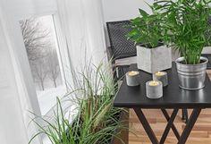 Szobanövények télen - PROAKTIVdirekt Életmód magazin és hírek - proaktivdirekt.com