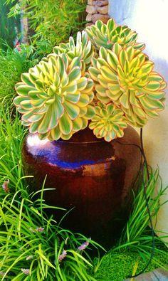 Succulent in a great pot