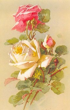 Print FREE SHIP French Roses by Catherine Klein Half Yard Long