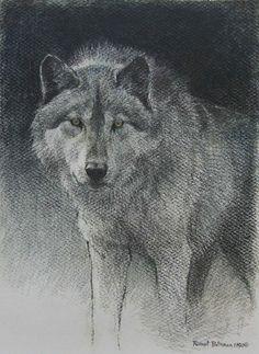 Robert Bateman Original Lithograph Wolf Sketch