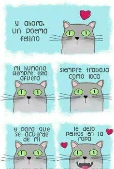 Poema felino