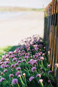 Flowers over looking the beach by .drew (Andrew Kelly) on Flickr.