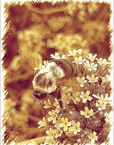FineArtSeen - Honey Bumble Bee by Barbara Storey. This limited edition photograph is full of colour and comes from the collection on FineArtSeen. Click to view more art at great prices from the Home Of Original Art. << Pin For Later >>