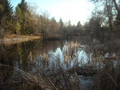 Lake in Paradise Springs