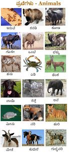 Posting a wallpaper on animals . Water Cycle Project, Kannada Language, In Kannada, English Exercises, Teaching Phonics, Mother Teresa, Our Kids, Boku No Hero Academia, Kids Learning