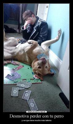 Desmotiva perder con tu perro - y ver que tiene mucho más talento