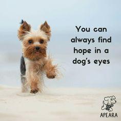 The traits I admire about the Brave Yorkshire Terrier Pup Die Eigenschaften, die ich am Brave Yorkshire Terrier Pup bewundere Westies, Cute Puppies, Cute Dogs, Tiny Puppies, Jiff Pom, Brave, Yorky, Silky Terrier, Yorkie Puppy