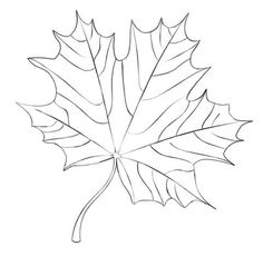 Maple Leaf coloring page from Maples category. Select from 23894 printable crafts of cartoons, nature, animals, Bible and many more.