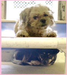 10/04/15-STILL THERE - SUPER URGENT - Marcie and Penny dumped at Carson shelter on Wednesday.