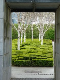 Le Parc Andre Citroen, Paris. White tree trunks silhouetted against evergreens