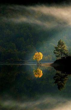Trees and dragon's breath fog