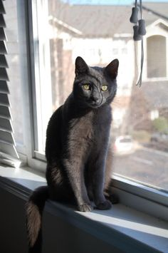 Love black Cats, In the window