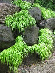 Quand on crée un enrochement pour retenir la terre au jardin, il ne faut pas hésiter à inclure des plantes entre les roches afin d'atténuer l'effet minéral. Ici ce sont des graminées dont le feuillage contraste fortement avec la teinte des rochers. Mais cela aurait aussi pu être des végétaux à fleurs.  Plus d'infos sur les enrochements au jardin : http://www.amenagementdujardin.net/6-facons-de-retenir-la-terre-dans-son-jardin/