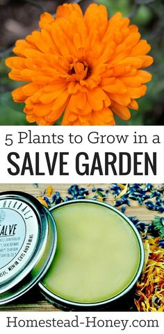 Grow a salve garden full of healing herbal plants that are both medicinal and beautiful. Here are five easy to grow plants for your salve garden.
