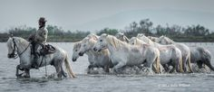 The Camargue photography tour includes 10 photographic sessions with horses in the Mediterranean Sea, beaches, sand dunes, salt flats, marshes and grassy wetlands.